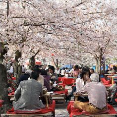 Hanami, Japan.  Outdoor party/picnic to celebrate the spring season and enjoy the beautiful flowers