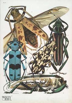 1. Batocera Hector, Java; 2. Callichroma suturalis, Guyane; 3. Steirastoma lacerta, Brésil; 4. Rosalia alpina, Europe; 5... ([1928])