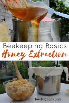 Beekeeping Harvest: Crushing and straining honey from the comb