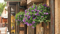 Million bells (Calibrachoa sp.)―trailing plants that resemble miniature petunias Hanging Flower Baskets, Hanging Plants, Chenille Plant, Ivy Geraniums, Flower Festival, Different Plants, Summer Garden, Petunias, Container Gardening