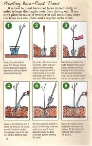 olive tree care instructions