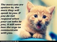 The more cats are spoken to, the more they will speak to you.  If you do not respond when your cat talks to you, it will soon lose the urge to communicate with you.