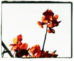 Fleurs de sang - null