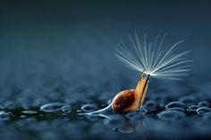 An umbrella by Andiyan Lutfi
