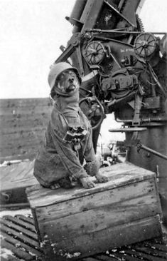 A German dog dressed up to look like an aircraft spotter by his 88 mm anti-aircraft gun during WWII