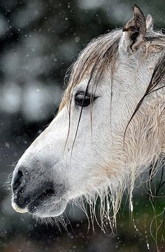 A pony in the snow in the Brecon Beacons, south Wales as freezing gales and snow brought Britain's warm weather to an end.  Photograph: Tim Ireland/PA