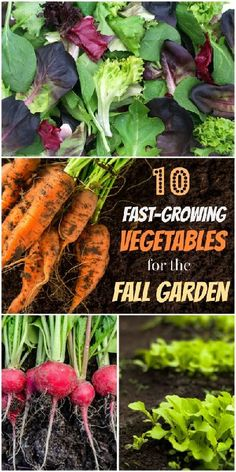 Plant These Speedy Fall Vegetables for a Last Hurrah!