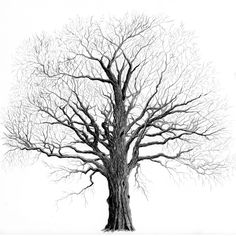 Tree Pencil Art | elm tree in winter by brightstone traditional art drawings landscapes ...