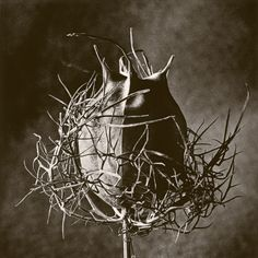 Devil in a Bush ©Cy DeCosse Fine Art Photography. Weeds Collection. Limited edition Hand-pulled photogravure print. CyDeCosse.com #photography #art #nature