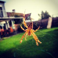 7 legs, still a spider Spider, Legs, Animals, Spiders, Animales, Animaux, Animal, Animais, Bridge