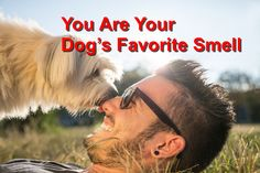 You Are Your Dog's Favorite Smell http://championwoodvet.com/wp-content/uploads/Dog-Smell.jpg Science is once again confirming what many dog lovers suspected: Our dogs know and love our smell. Research published online in the January 2015 journal Behavioral Processes used advanced brain-imaging to prove dogs recognize our scent, even when we're not around. Even more interesting is how t... http://championwoodvet.com/social/you-are-your-dogs-favorite-smell/