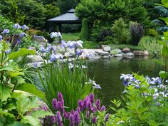 A small summerhouse and stone patio border this large pond that is surrounded by flowering plants.