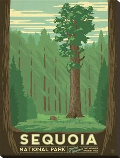 Sequoia National Park Stretched Canvas Print at Art.com