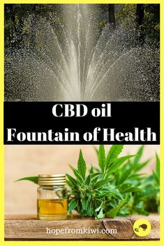 2362 Best Befly's CBD Health images in 2019 | Cannabis