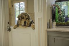 George, a Tibetan mastiff, in a French Country house in Lake Bluff, Ill. #dogsofwsj