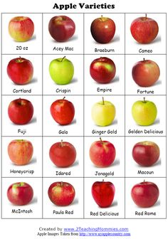 Apple themed ideas, lessons, activities. this would have been helpful when i was teaching trees with kindergarten