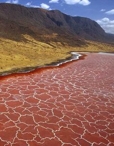 Kenya Lake System in the Great Rift Valley, Kenya  have earned special attention from the UNESCO committee due to the fact that their waters and the shrimp & algae living in them sustain as much as 75 percent of the world's Lesser Flamingos.