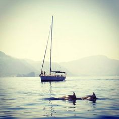 Dolphins frolicking along the Tramuntana coastline, #Mallorca- Always a delightful sight! (Pic from Sóller Concierge)  More info: http://www.tramuntana.com/leisure/mezzo-magic/