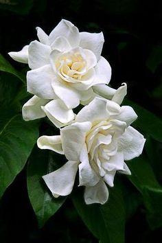 Double Beauty....  blog.kateaspen.com