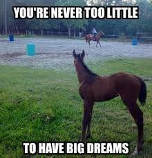 Awwwwww - Horses Funny - Funny Horse Meme - - Awwwwww Horses Funny Funny Horse Meme Awwwwww The post Awwwwww appeared first on Gag Dad. The post Awwwwww appeared first on Gag Dad. Funny Horse Memes, Funny Horse Pictures, Funny Horses, Cute Horses, Funny Animal Memes, Horse Love, Cute Funny Animals, Cute Baby Animals, Funny Cute