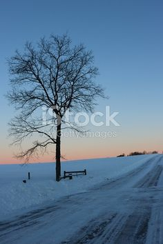 A lone tree is silouetted against the early morning sky following a heavy snowfall.