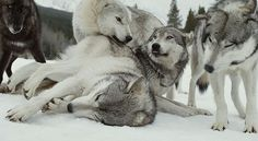 Happy wolves.