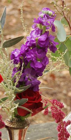 Florissimo - Flowers for weddings and events in Shropshire. STOCK (MATTHIOLA), MAR-SEP. From Florissimo Flower Directory at https://uk.pinterest.com/ByFlorissimo/flower-directory/ | White, pink, pale purple and dark purple