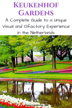 #Keukenhof Gardens, the Netherlands: A Complete guide to A Unique Visual and Olfactory Experience   Travellector  #travel #traveltips #Netherlands