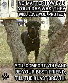 Love my Rottweiler