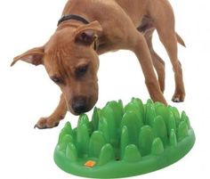 Green Interactive Pet Feeder; helps prevent dogs from inhaling their food.
