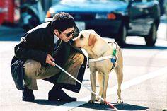 ¿Qué es un perro lazarillo? Conoce a la mascota ideal para una persona con discapacidad visual http://www.mascotadomestica.com/articulos-sobre-perros/el-perro-ideal-para-no-videntes.html