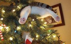 Cats Who Definitely Don't Want To Destroy Your Tree