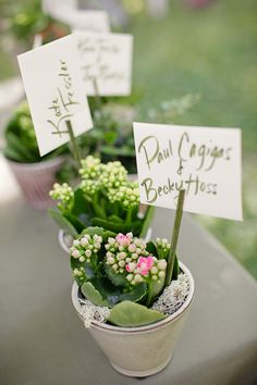 wedding favor flowers plants