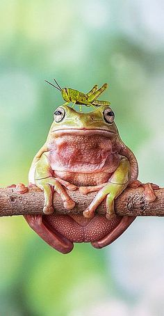 "Living High ""On The Frog"" will likely lead you to need cash now.  Be smart and seek quality ""LO-CUST"" solutions--- eh grasshoppa?  Ribbit!"