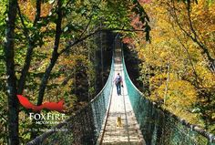 Foxfire Mountain Swinging Bridge the longest swinging bridge in the US at Lost Mine Falls. Vacation Places, Places To Travel, Places To See, Vacations, Vacation Ideas, Gatlinburg Vacation, Tennessee Vacation, Gatlinburg Tn, Attraction