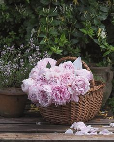 When you arrive home, and there are scoops of delicious strawberry ice cream peonies waiting for you on the doorstep. A surprise gift… Peonies Bouquet, Peony, Bouquets, Strawberry Ice Cream, Surprise Gifts, Girly Things, Flower Power, Wild Flowers, Garden