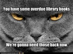 Stern librarian cat
