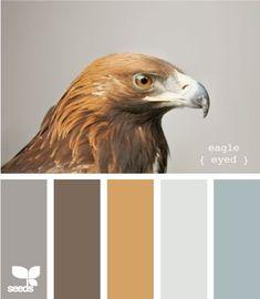 Dark Gray - accent wall Brown - furniture caramel - floors light gray - walls blue - accent pcs
