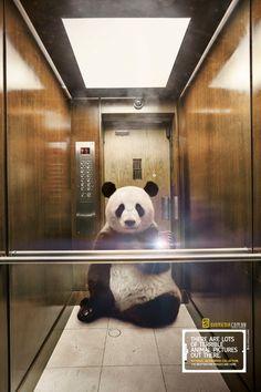 Panda national geographic diomedia wildlife selfies