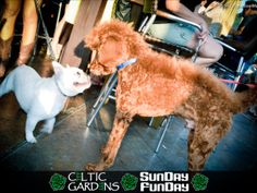 Celtic Gardens - another dog-friendly bar in Houston