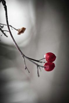 Red Berries Photograph  - Red Berries Fine Art Print