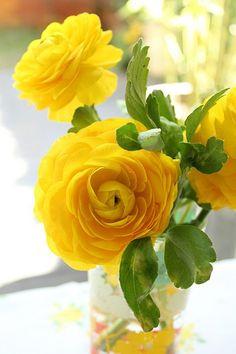 {happy roses}