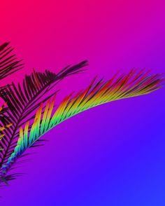 SIGNE PIERCE  Rainbow Palm  2015
