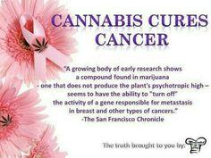 Cannabis cures. http://Hempico.biz