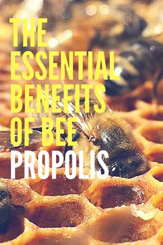 """The Essential Benefits of Bee Propolis - Often referred to as """"bee glue"""", bee propolis has been popular due to its essential benefits. Based on facts, bee propolis is a resinous mixture which is made by bees using tree buds, sap flows or other botanical resources."""