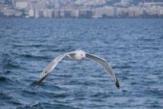 Γλάρος μπροστά στην πόλη #2. (Αύγουστος 2018) Greece, Animals, Greece Country, Animales, Animaux, Animal, Animais