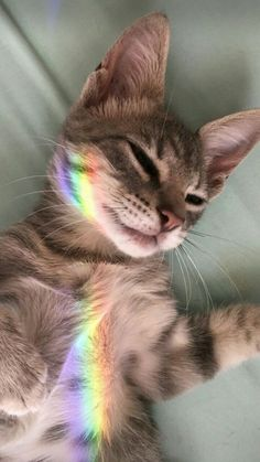 10 loving, amazing cats for National Cat Day - Katzen Bilder - Hunde Cute Baby Animals, Animals And Pets, Funny Animals, Animals Sea, Crazy Animals, Animals Images, Animal Memes, Farm Animals, Cute Kittens