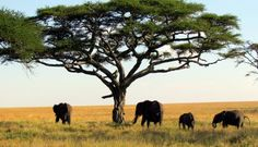 78bff640d201 Travel essentials for your African safari by our Tanzania local expert - A  holiday in Africa