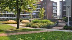 Buitenruimten bij appartementen De Nieuwe Vaart | Lagendijk tuin- en landschapsarchitecten