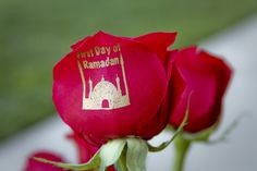 Today, Ramadan Begins! www.speakingroses.com